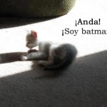 Un gato que ve su sombra y se cree batman